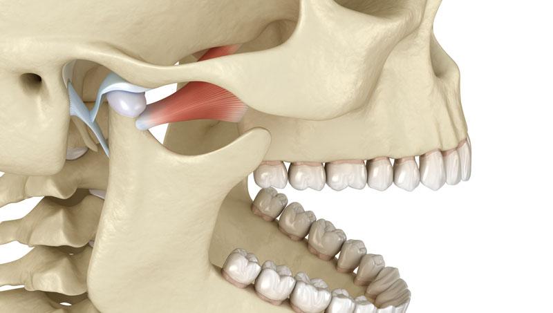articulatia temporo mandibulara anatomie)